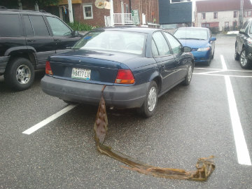 Car with seaweed